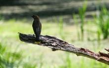 bird2