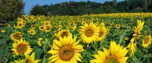 cropped-flower1.jpg