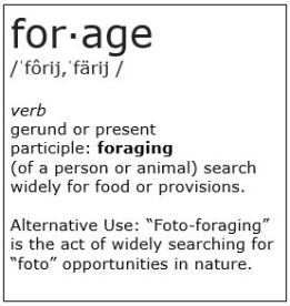 Definition of Forage