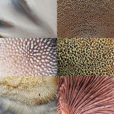 Mushroom Collage