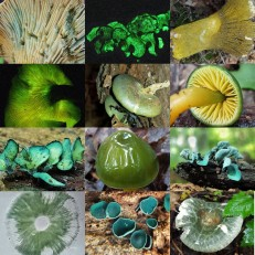 Green Mushroom Collage
