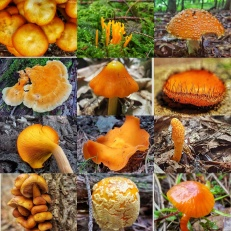 Orange Mushroom Collage