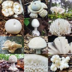 White Mushroom Collage