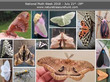 nationalmothweek2.png